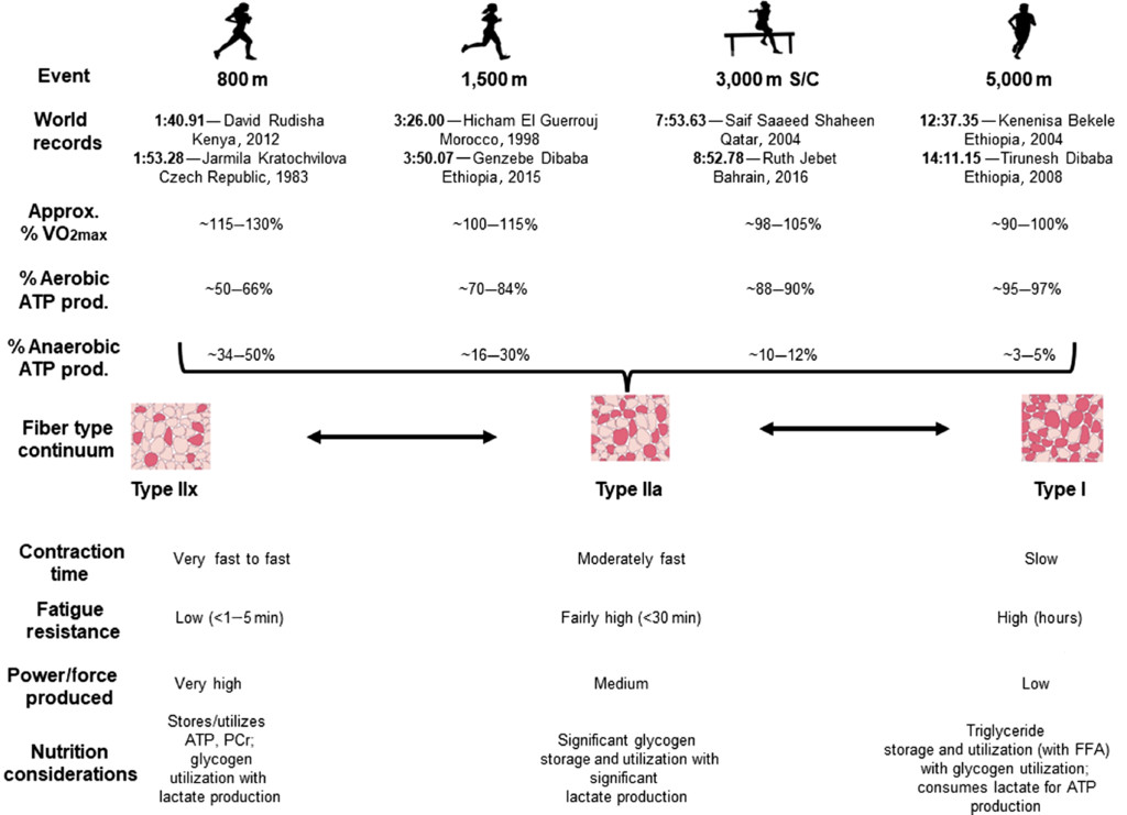 Contemporary Nutrition Interventions to Optimize Performance in Middle-Distance Runners in: International Journal of Sport Nutrition and Exercise Metabolism Volume 29 Issue 2 (2019)