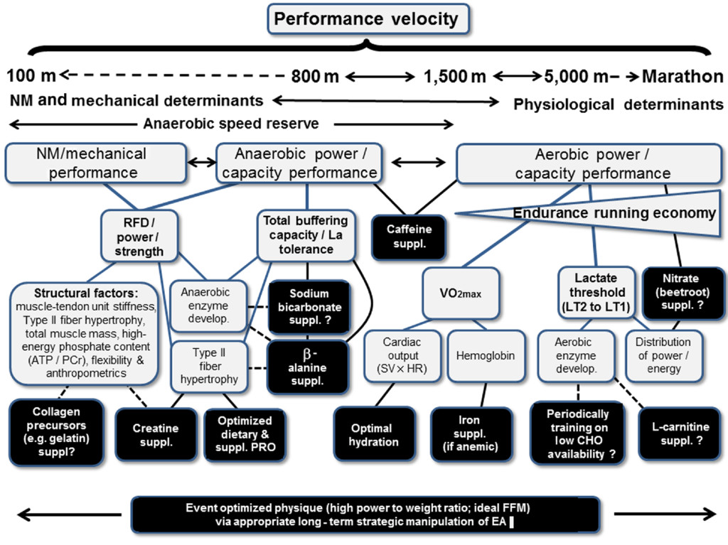 Contemporary Nutrition Interventions to Optimize Performance