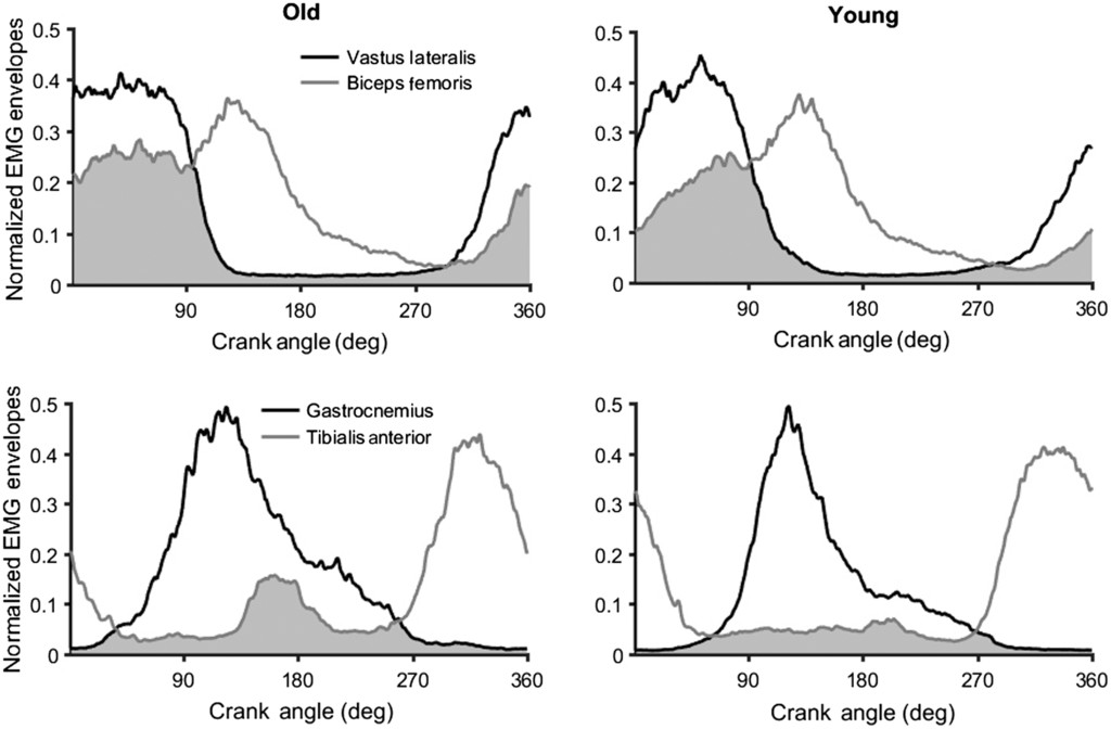 Effects of Age, Power Output, and Cadence on Energy